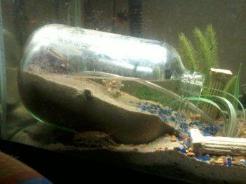 Экосистема в аквариуме