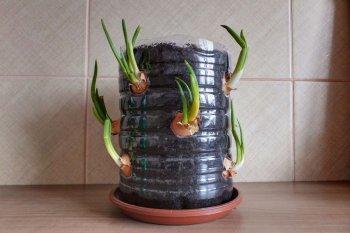 Грядка для зеленого лука из подручных материалов