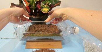 Вертикальный сад из пластиковых бутылок своими руками